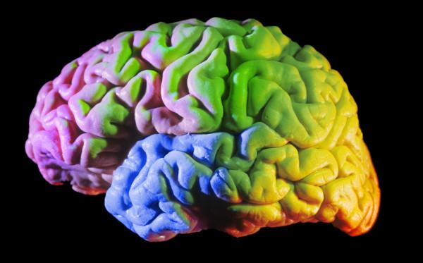 Human_Brain_PSEUDO2